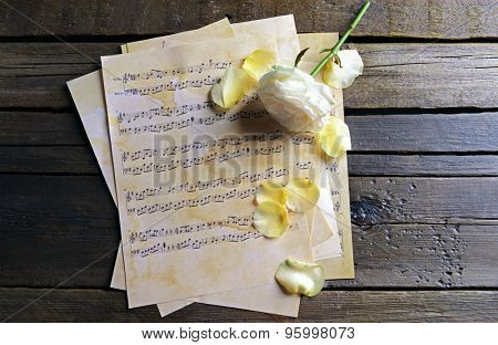 Beautiful rose on music sheets on wooden background