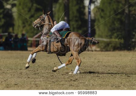Polocrosse Horse Rider Action