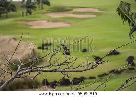 Lush Green Fairways On A Golf Course