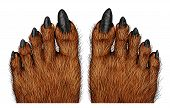 picture of creatures  - Werewolf feet as a creepy creature for halloween or scary symbol with textured hairy and textured foot skin with cursed wolf monster toes on a white background - JPG