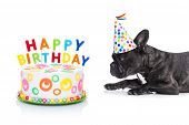 foto of birthday hat  - french bulldog dog hungry for a happy birthday cake with candles wearing party hat isolated on white background - JPG