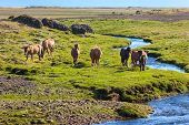 stock photo of iceland farm  - Horses in a green field of grass at Iceland Rural landscape - JPG