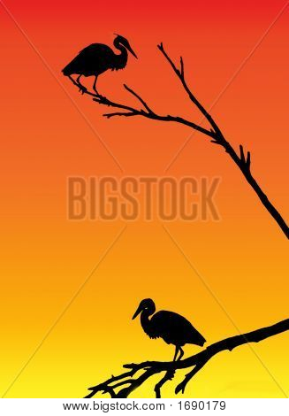 Herons At Sunrise