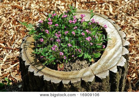 stool with flowers