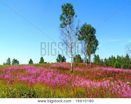 flowerses malva en campo
