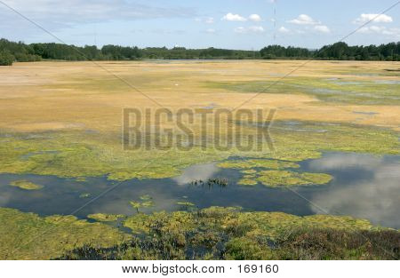 Lake Covered In Algae