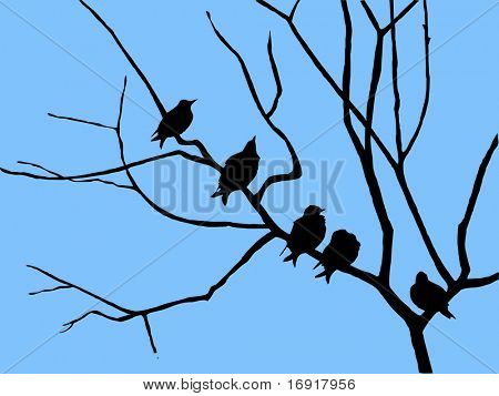 silhouette starling on branch tree