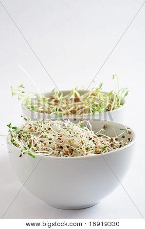 Beansprout Bowls - Portrait Orientation