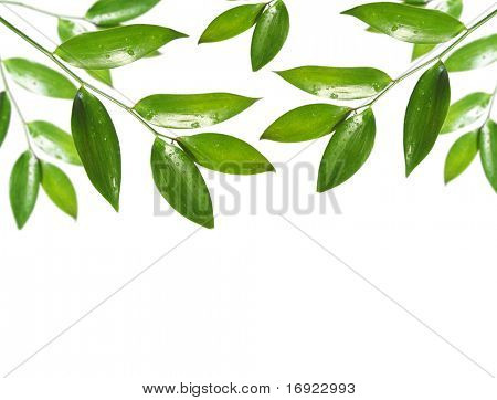 blank with green leaf