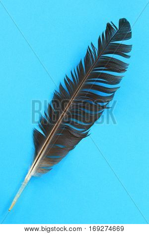 Closeup of black feather on blue background