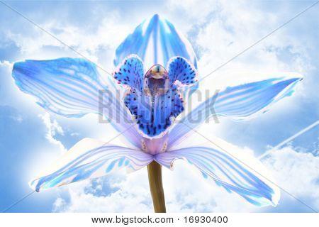 exótica Orquídea azul cielo