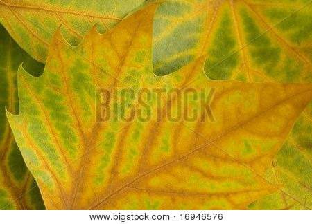 Warm colors of Autumn. Leaves covering the ground.