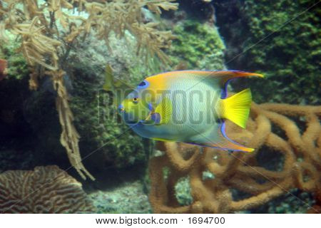 Tropical Fish Closeup