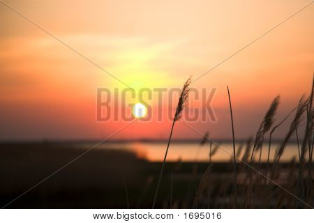 Sunset With Plant Silhouette
