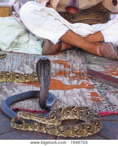Cobra e sedutor