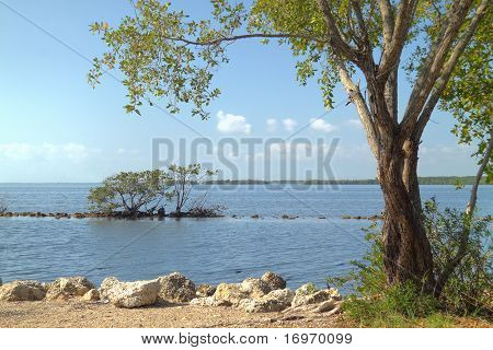 Buttonwood Biscayne National Park