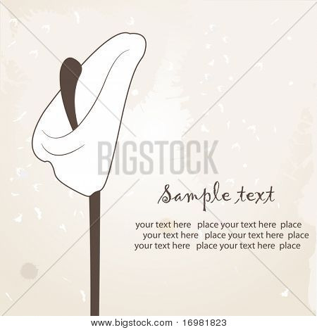Floral card with calla lily flower. Vector illustration.