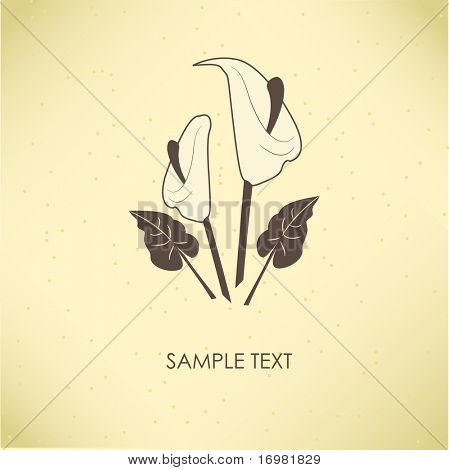 Vintage greeting card with calla lily flower. Vector illustration.