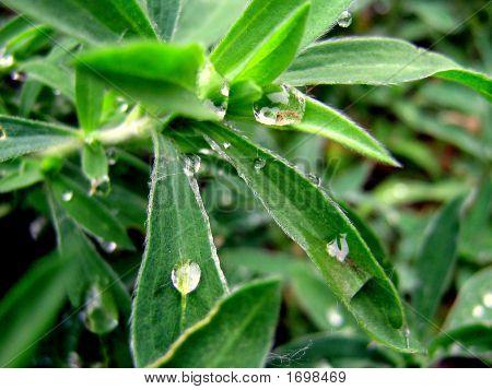 drops of a rain
