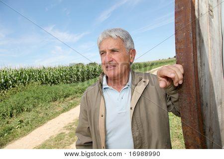 Closeup de agrónomo frente a campo de maíz