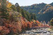 korankei Forest autumn park Nagoya Japan poster