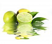 Постер, плакат: свежий зеленый лайм в воде