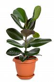 image of house plants  - Home plant in flowerpot - JPG