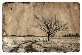 image of dirt road  - grunge background - JPG