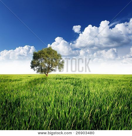 Alone tree on the green meadow under cloudy sky