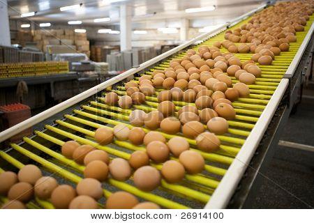 eggs production line