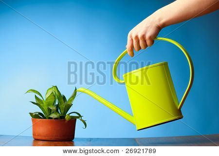 hand watering a plant with watering-can