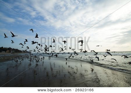 loads of Sea gulls on coast