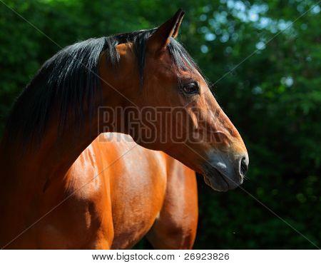 Summer horse portrait