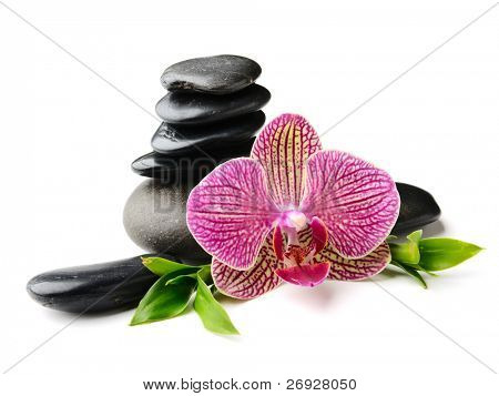 Pink orchid and stones on the white background