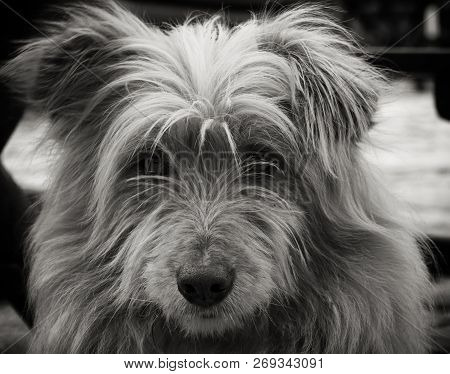 poster of Portrait Of A Dog. Beautiful Dog Portrait. Close Up Pf A Dog. Dog Animal. Stray Dog Portrait. Beauti