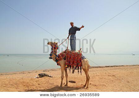 Camel owner on egyptian beach
