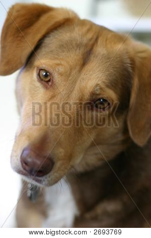 Cute Mixed Breed Brown Dog