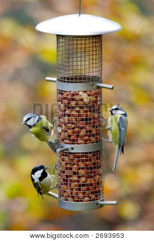 Garden Birds On Feeder
