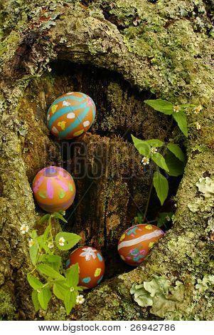 Easter eggs hidden in tree hollow