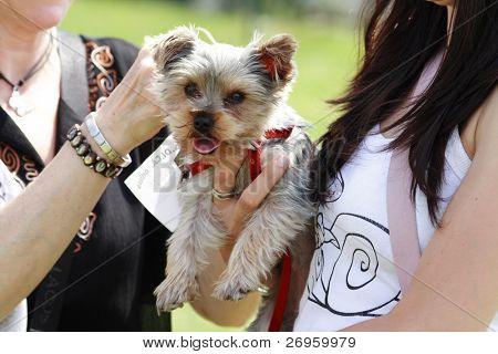 schöne Baby-Hund