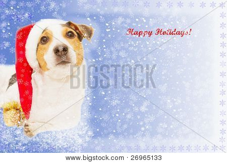 postcard with funny dog as santa, snow, snowflakes