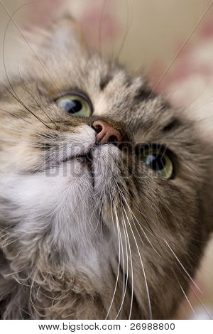 picture of the cat close-up