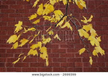 Yellow Leaves Branch