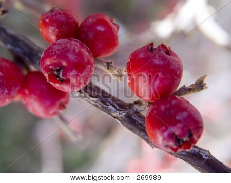 Heavenly Fruits