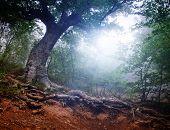 Постер, плакат: Волшебный лес ранним утром