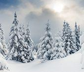 Постер, плакат: Деревья покрыты инеем и снега в горах