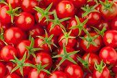 Постер, плакат: множество помидоры черри укрупненного вида