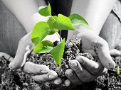 stock photo of planting trees  - Green plant in the hand - JPG