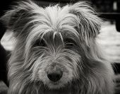 Portrait Of A Dog. Beautiful Dog Portrait. Close Up Pf A Dog. Dog Animal. Stray Dog Portrait. Beauti poster