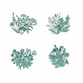 Vector Hand Drawn Medical Herbs Bouquets Set Illustration. Herb Nature Bouquet, Botany Medicinal Flo poster